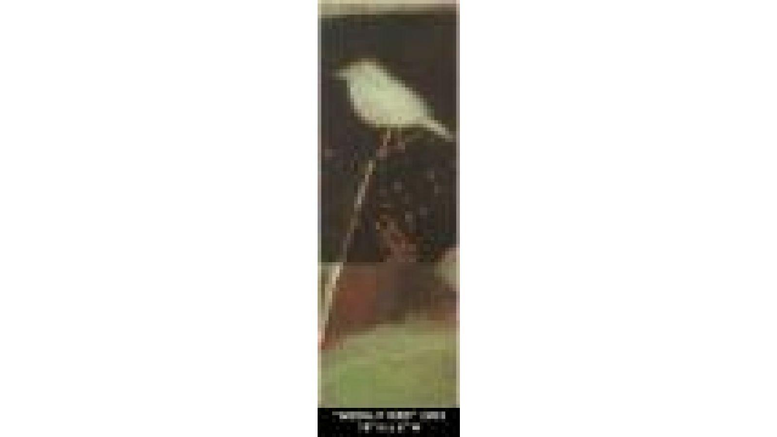 moonlitbird