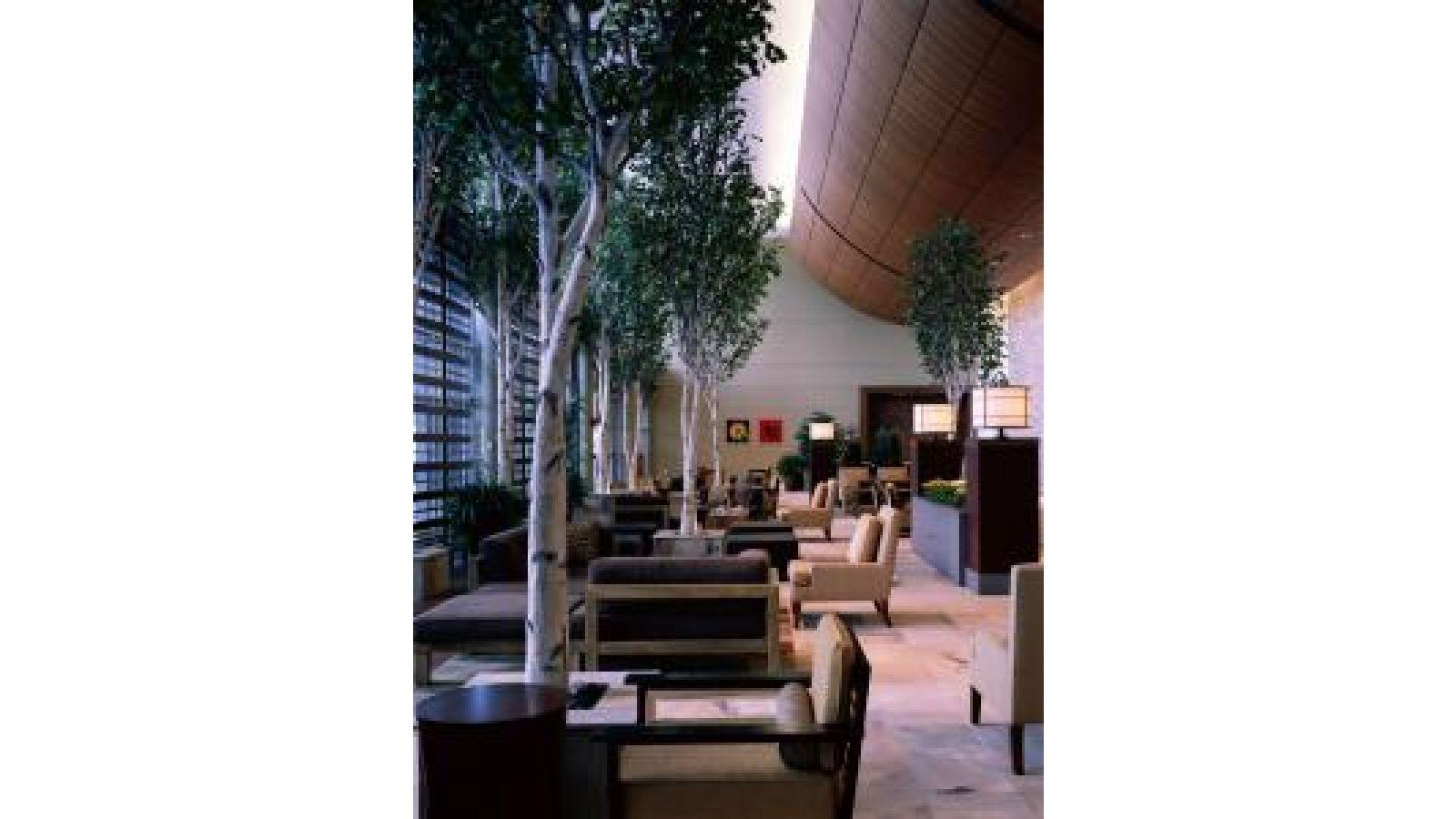 Birch Trees – Hotel