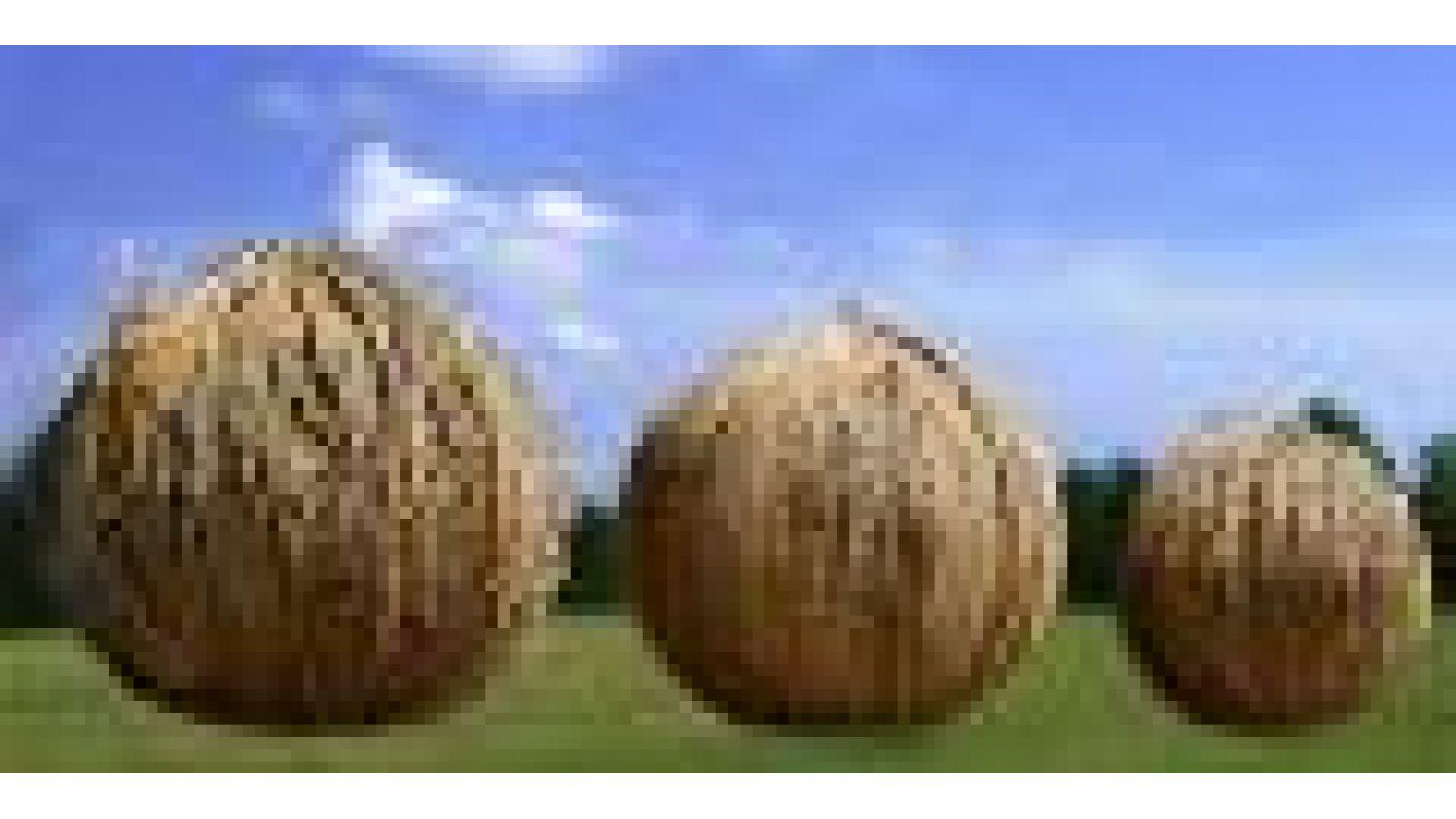 The BIG BALLS