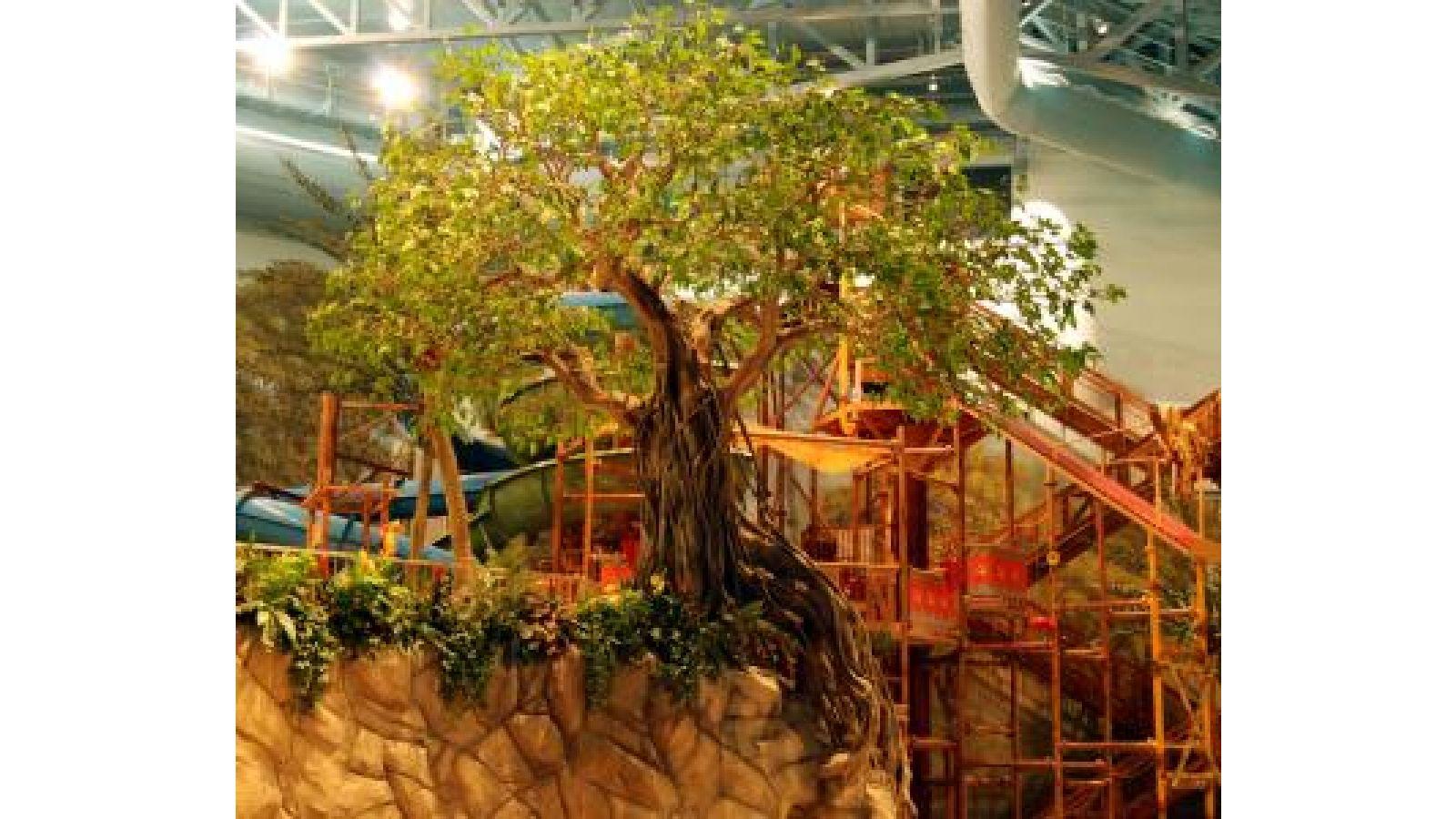 Banyan Tree - Aquatic Center