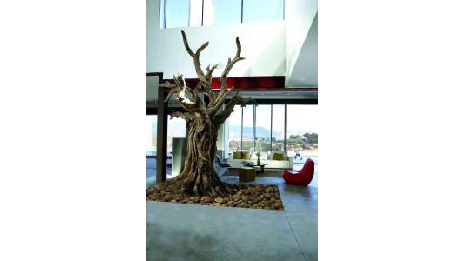 Bristlecone Pine Tree – Residential