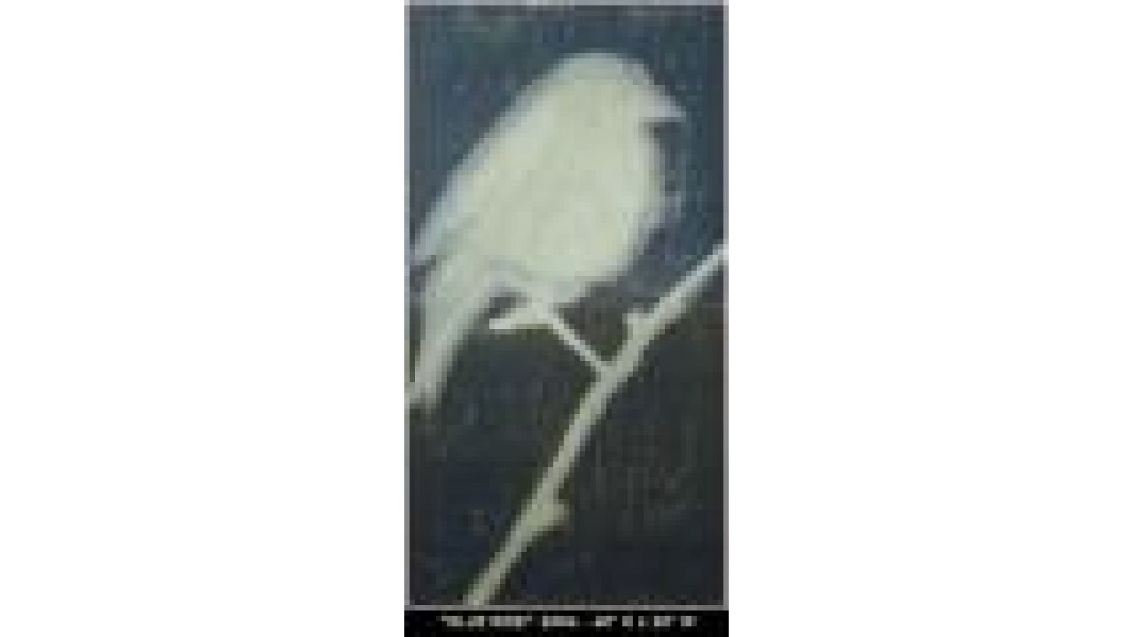 bluebirdalone