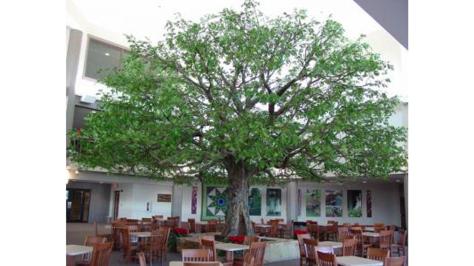 Oak Tree – Resort(a)