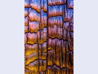 Burnt Tree Detail by Alexander S. Kunz