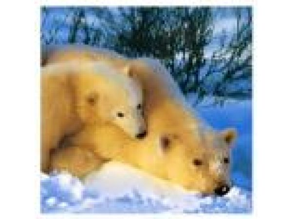 Bear and Cub PF505