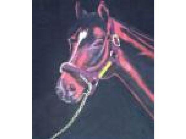 Horse PF508