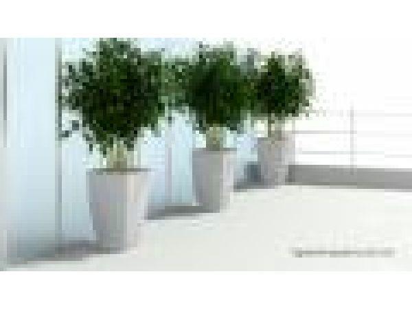 Bellini Planters