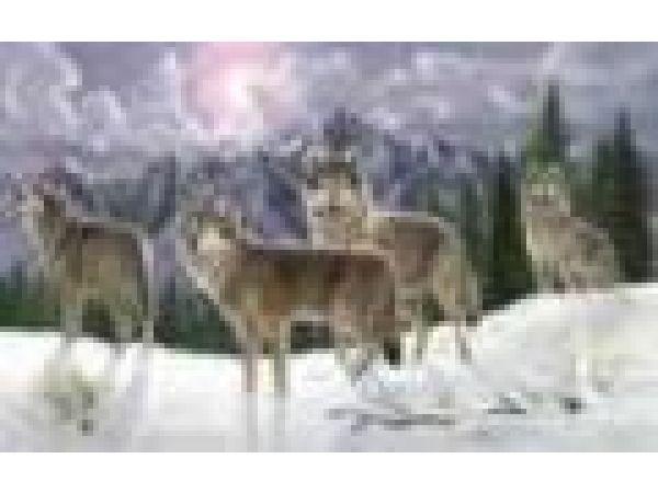 Night Lights - Timberwolves