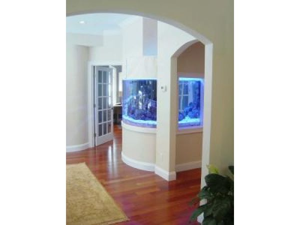 Contemporary Salt Water Aquarium