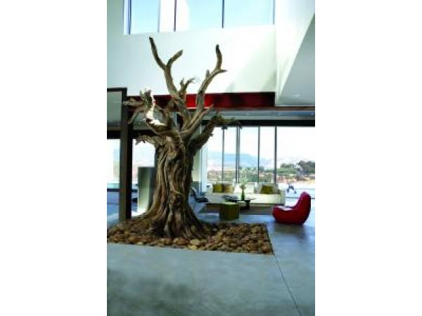 Bristlecone Pine Tree – Residential
