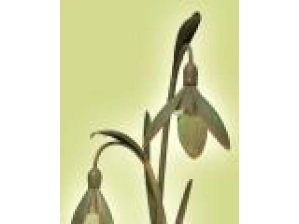 Schneeglöckchen Snowdrop Garden Lamp (Twin Light)