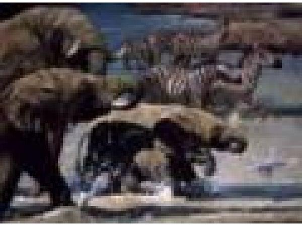 Elephants & Zebras