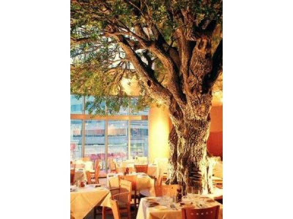 Oak Tree – Restaurant