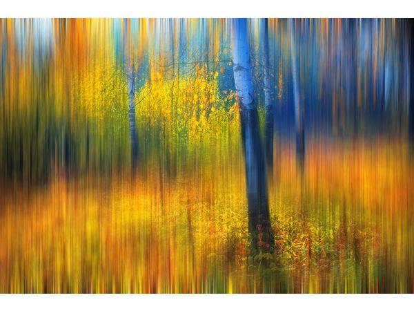 Evgeniya Vlasova: In the Golden Woods