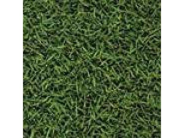 Grass GR11