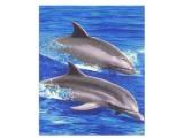 Dolphins PF401