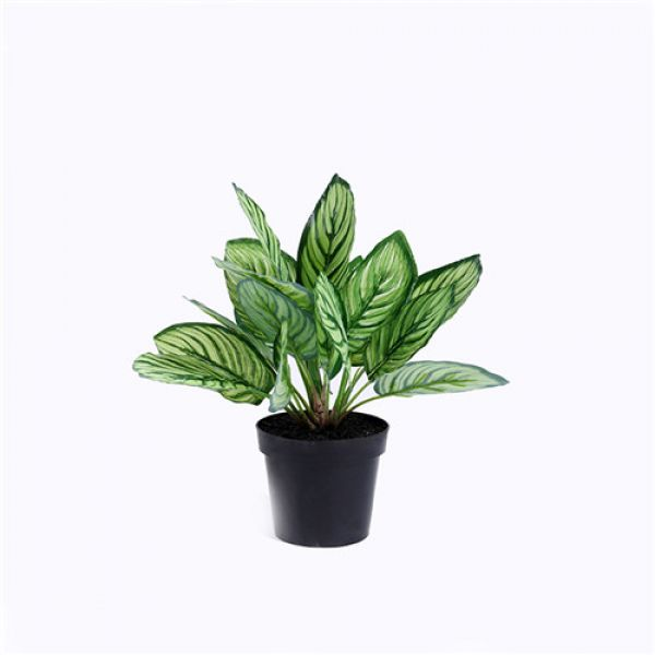 Design Journal Archinterious Artificial Calathea Sanderiana By Sharetrade Artificial Plant