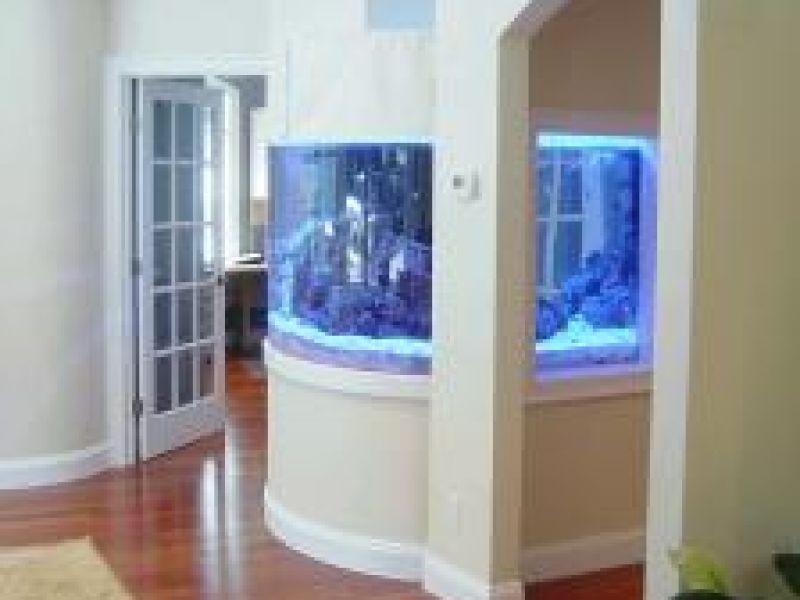 Contemporary Salt Water Aquarium