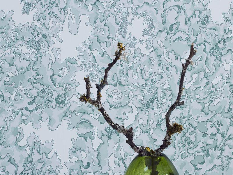 Lichen wallpaper